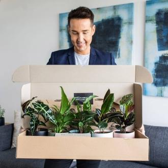 interior designer chris carroll indoor plant delivery bosque five plants delivered in coloured pots
